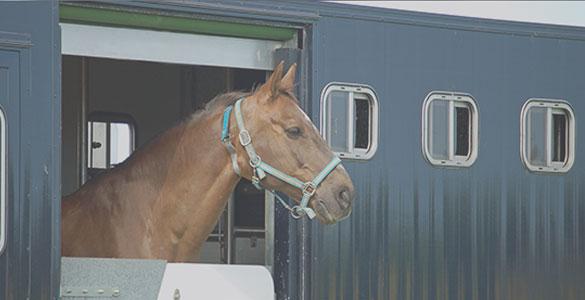 Animal transport monitoring