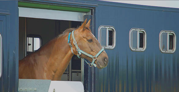 Überwachung von Tiertransporten